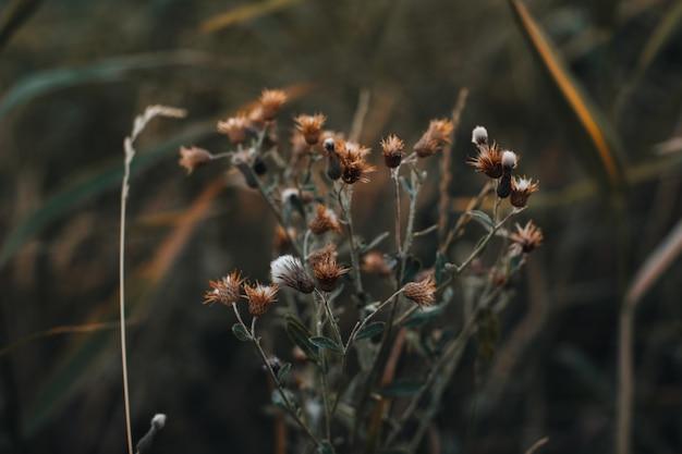 Осенние полевые цветы на размытом фоне в дикой природе сентябрьские детали природы