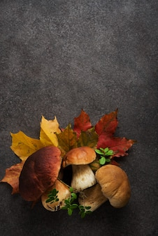 森の中の葉と野生のキノコと秋