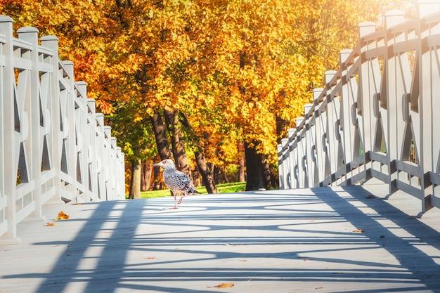 カモメが歩く秋の木製の橋。木製の橋の明るく晴れた秋の景色。