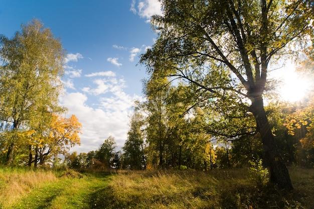 Осенние леса