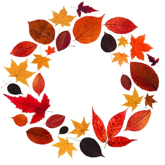赤と黄色の葉の秋の花輪。