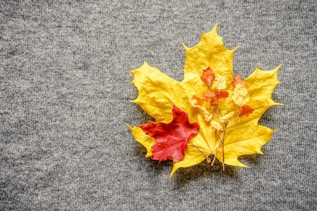 Осенние желто-красные кленовые листья на фоне серого уютного вязаного свитера