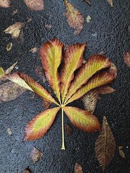 濡れたアスファルトの秋の黄褐色の葉、秋の概念と落ち葉