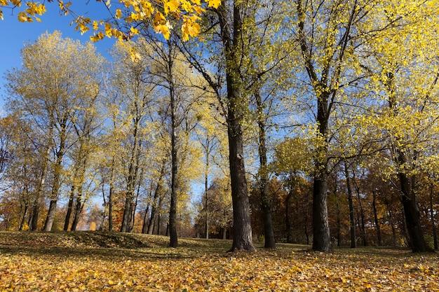 公園や木の枝の自然の中で、葉の落下中の秋の黄色の葉