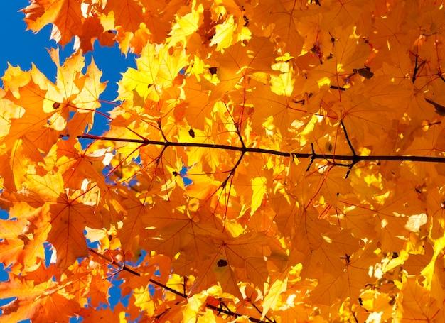 공원에서 자연에서 잎 가을 동안 가을 노란 단풍