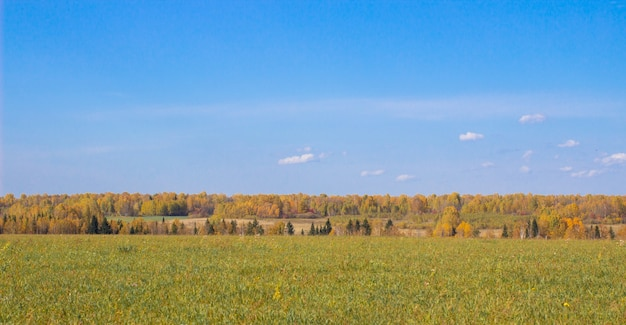 가을 노란 숲과 필드. 숲 위에 구름과 푸른 하늘입니다. 가을 자연의 아름다움.