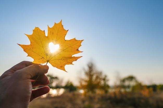 Autumn yellow leaf of maple with cut heart in a hand against blue sky
