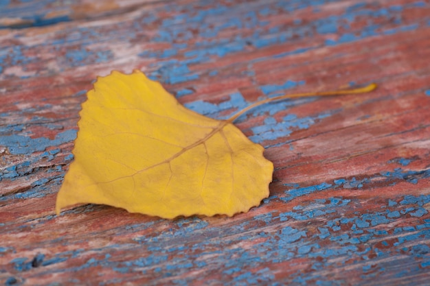 Autumn yellow leaf on wooden backgound