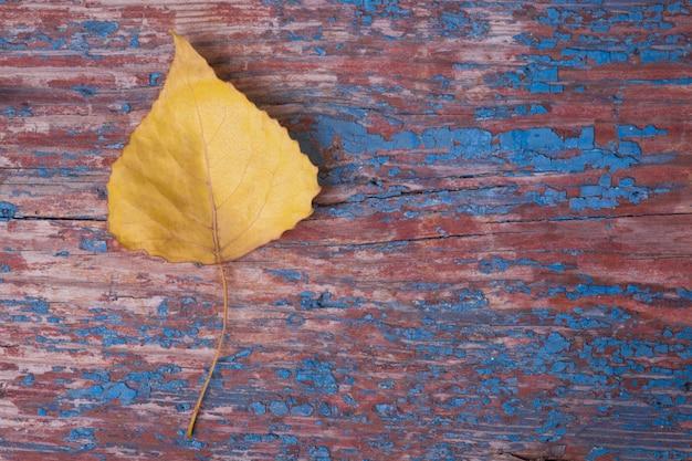 Autumn yellow leaf on wooden background