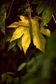 Autumn yellow leave on the sun