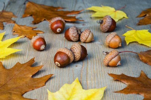 Осенние желтые листья и желуди на фоне дерева