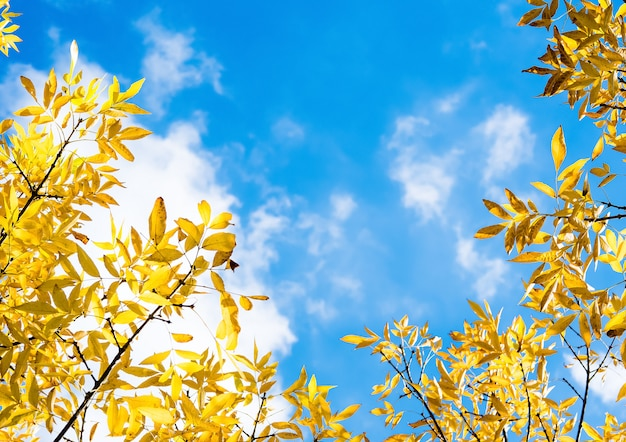 Autumn yellow leaves on blue sky