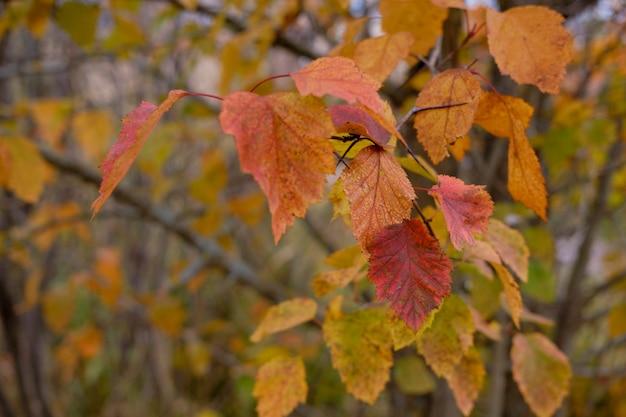 Осенние желтые листья крупным планом