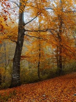 秋の黄色の葉の森の自然旅行植物。高品質の写真