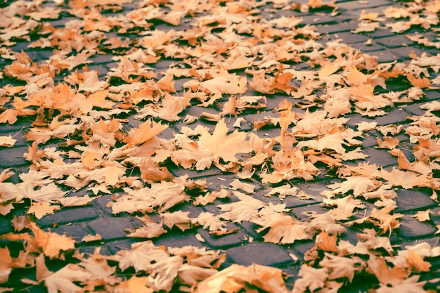 Autumn yellow leaves on the ground in the park. fall