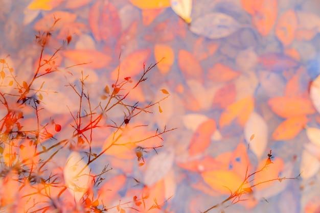Осенние желтые листья на фоне лужи. осенний фон. баннер осень. осенние листья. природа. копировать пространство