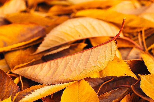 秋の黄色の葉が地面に横たわっています Premium写真