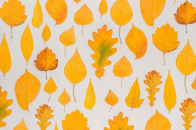 가 노란색 회색 배경에 단풍, 가을 벽지. 평면도 평면도.