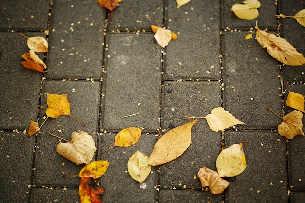 Autumn yellow leaves on the pavement fall background