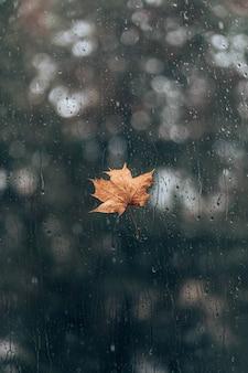 ガラス窓に秋の黄色のカエデの葉