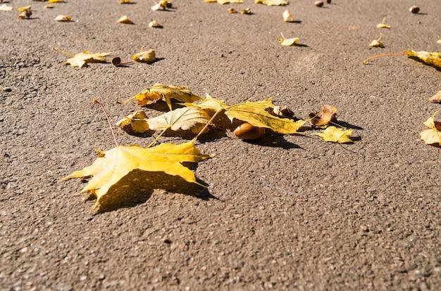 Осенние желтые кленовые листья и желуди на коричневом асфальте при ярком солнечном свете.