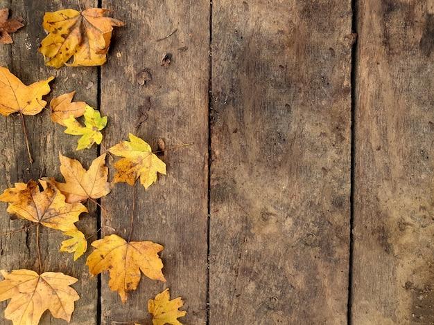 秋の黄橙色の葉