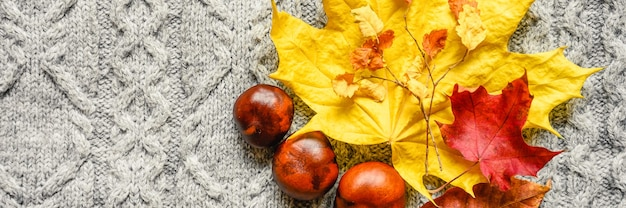 Autumn yellow and red leaves of maple and cherry, and three chestnuts are located on the background of a gray cozy knitted sweater or plaid with a pigtail pattern. fall concept. banner