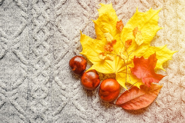 Autumn yellow and red leaves of maple and cherry, and three chestnuts are located on the background of a gray cozy knitted sweater or plaid with a pigtail pattern. fall concept. flare