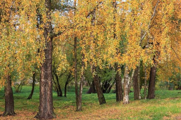 公園の秋の黄色い木