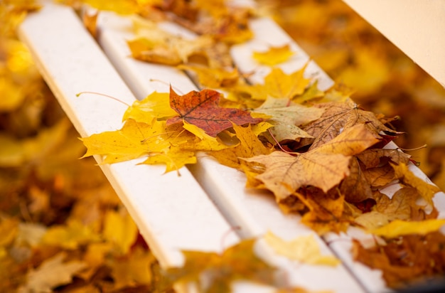 Autumna wooden white bench in a city park is covered with fallen bright leaves close up