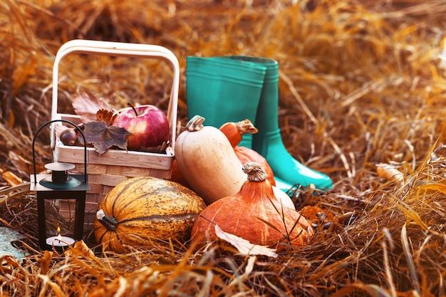 わらの秋の配置