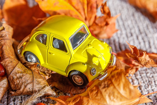 Autumnal background. yelllow toy car and dried orange fall maple leaves on grey knitted sweater