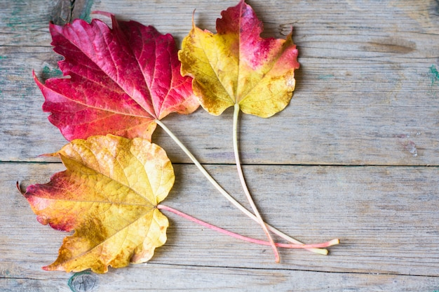 Autumnal bright leaves background
