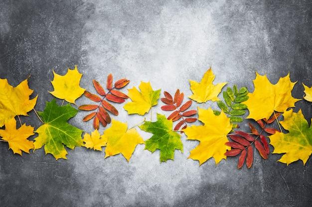 秋の構成。灰色の背景に黄色と赤の葉で作られた境界線。秋、秋