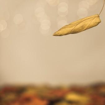 Autumnal falling leaf