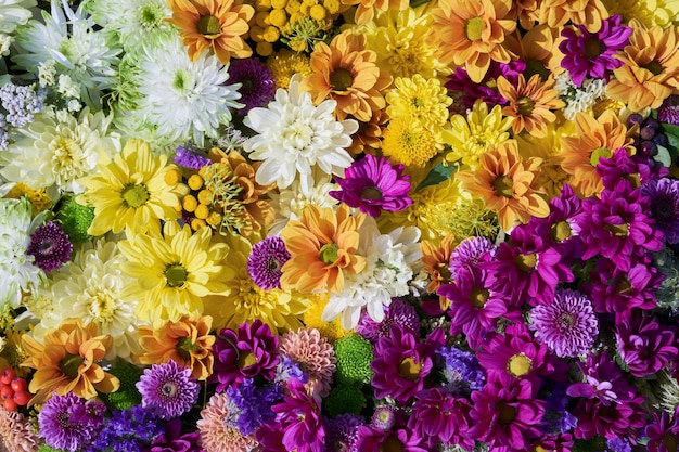 Autumnal flowers. a carpet of colorful flowers.