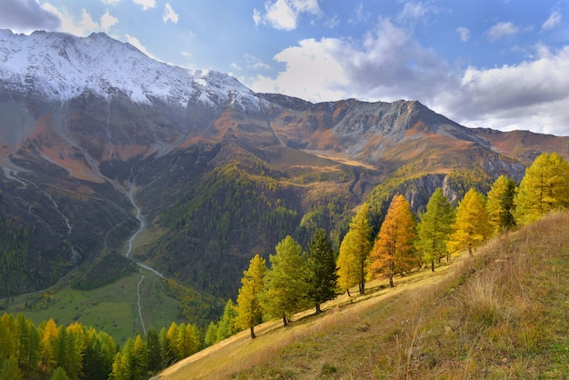 아름다운 고산 산의 단풍 나무