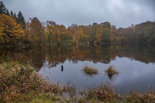 하늘 아래 숲과 오색 호숫가입니다. 가을 화창한 날에 졸졸 흐르는 호수의 바위 해안에 나무