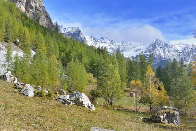 눈 산으로 낙엽송 나무의 고산 숲에서가 풍경