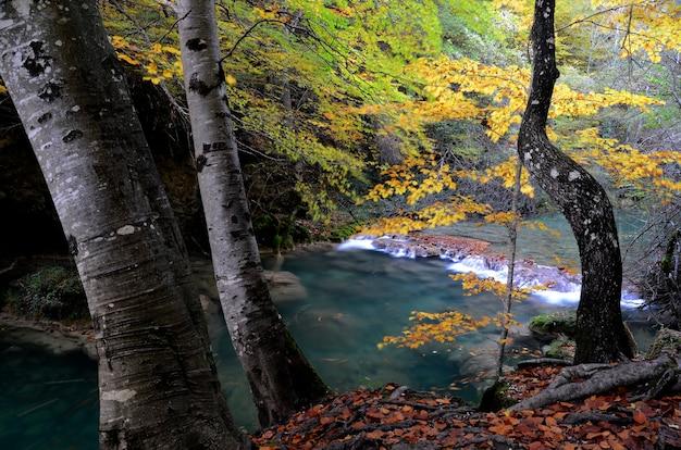 Urederra 강 자연 보호 구역의 가을 풍경. 나바라. 스페인