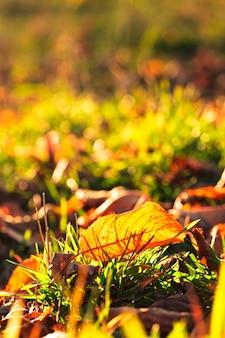 Осенний лист над зеленой травой и золотым солнечным светом