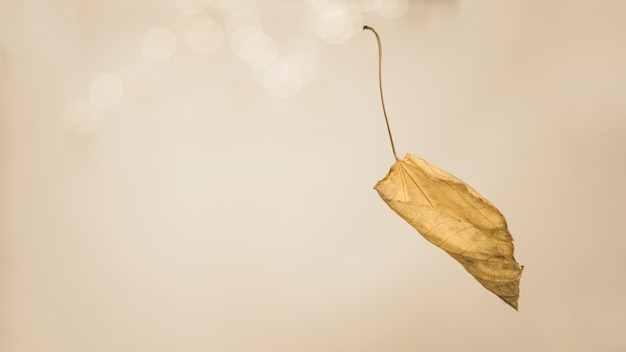 Autumnal leaf with twig falling