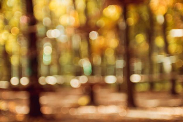秋の公園。明るくカラフルなボケ。