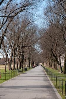 ワシントンdcのリフレクティングプールの横にある木の大通り