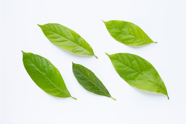 Avocado leaves on white.