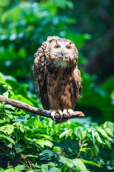 Awesome owl on a branch