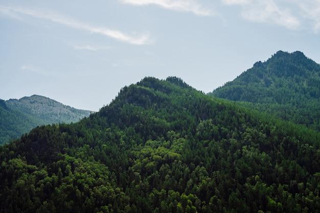 맑고 푸른 하늘 아래 숲으로 완전히 덮인 녹색 산의 멋진 경치를 볼 수 있습니다.