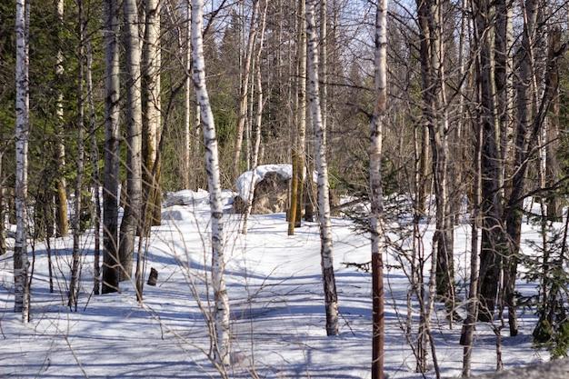Потрясающий зимний пейзаж. заснеженная тропа среди деревьев в диком лесу. зимний лес. лес в снегу.