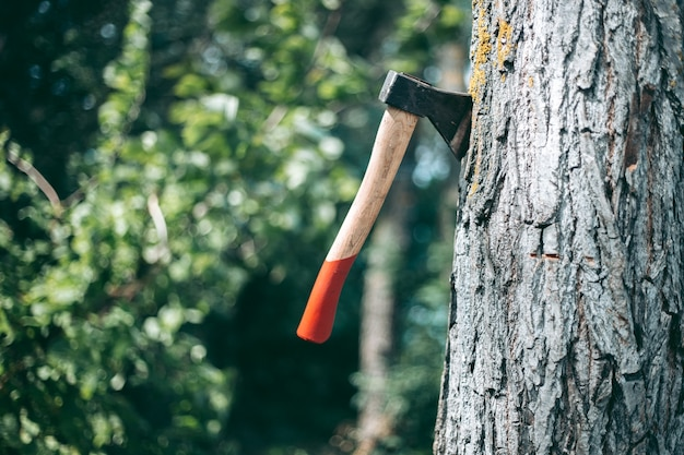 Ax with a red wooden handle stuck in a tree