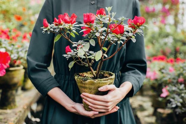 ツツジのある温室を背景に、女性の手にある鉢植えのツツジの花